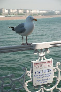 Brighton Seagull by Ruth Backshall with warning sign on Brighton Palace Pier