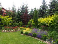Kolorowy ogród na piasku - strona 472 - Forum ogrodnicze - Ogrodowisko