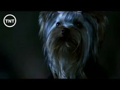 Running From Puppy | Supernatural | TNT - YouTube