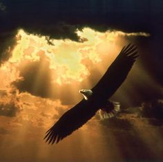 On the Wings of an Eagle