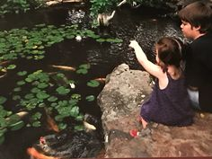 They immediately engage with the fish & frogs. I love to see that connection 😊 Koi Ponds, Water Gardens, Frogs, Connection, Jackson, Nursery, Patio, Fish, Baby Room