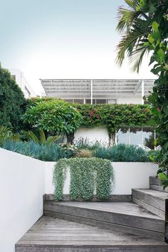 10 glorious coastal gardens - The entry to this Sydney garden designed by Lyndall Keating of Garden Society is a journey through - Landscaping Supplies, Front Yard Landscaping, Backyard Landscaping, Landscaping Ideas, Backyard Ideas, Coastal Landscaping, Backyard Plants, Landscape Plans, Landscape Design