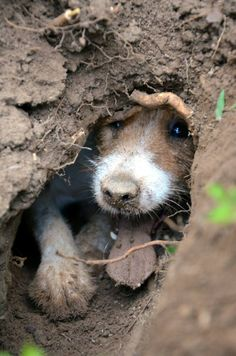 Jack in a hole! :)