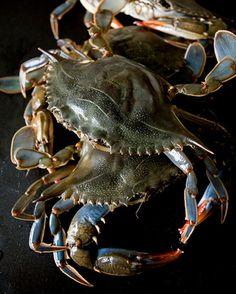 Adriana Mullen Soft Shell Crabs