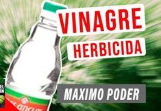 You searched for - Cosas del Jardin Organic Homemade, Garden Online, Greenhouse Gardening, Mountain Dew, Garden Plants, Garden Landscaping, Eco Friendly, Tips, Control