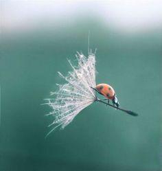 you wanna know what I use as a hang-glider?........... a dandelion seed. haha! @Lexie Terrell @Tori Cowan @Keri Terrell