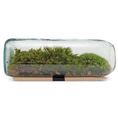 Moss Terrarium in a reclaimed wine bottle
