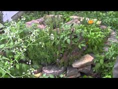 How to Build an Herb Spiral Part 2 (Planting) : FoodProduction101 | Grow Your Own Food | Chicken Care