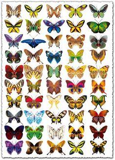 Realistic butterflies vectors