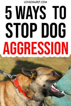 How To Stop Dog Aggression - Waggy Furry Tails Online Dog Training, Training Your Dog, Happy Animals, Animals And Pets, Furry Tails, Aggressive Dog, Dog Behavior, Dog Treats, 5 Ways