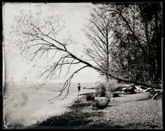 Michael Kolster, Leaning Tree, Rice Center, Charles City County, 2012 Archival pigment print from scanned ambrotype 32 x 40 inches