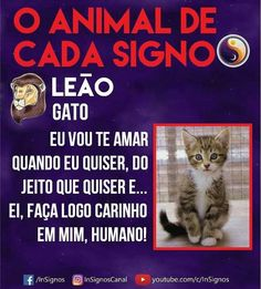 Read Animal De Cada Signo from the story Signos by Sexytaekookv (𝙶𝙰𝚃𝙸𝙽𝙷𝙰) with reads. Everything About You, Mbti, Galaxy Wallpaper, Memes, Zodiac Signs, Humor, Reading, Wattpad, Barbie
