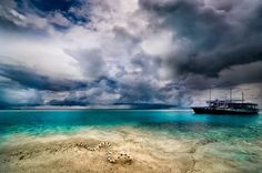 Colubrine Sea Krait (Laticauda colubrina