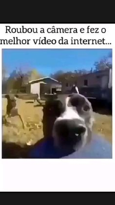 Animals And Pets, Funny Animals, Cute Animals, Really Funny, Funny Cute, Hilarious, Funny Dogs, Funny Memes, Funny Fails