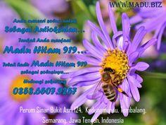 Sempat disinggung sebelumnya, kandungan gula yang rendah dalam madu hitam 919 membuatnya baik untuk dikonsumsi oleh penderita diabetes. Alasan lainnya, madu hitam 919 juga dapat menurunkan kadar gula dalam darah. Di samping penderita diabetes, mereka yang hipertensi atau anemia juga bisa merasakan khasiat madu hitam 919 agar membantu mempercepat proses penyembuhan. Kami melayani pengiriman ke seluruh Indonesia menggunakan JNE. Pengiriman dari kota Semarang, Jawa Tengah Cp 0858.6507.9257 Whatsapp Messenger, All Over The World