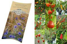 """Saatgut Set: """"Seltene Chilisorten"""", 9 wenig bekannte Chilis mit tollem Geschmack, je 10 Samen in schöner Geschenk-Verpackung: AmazonSmile: Garten"""