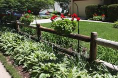 Across the yard tended by Ray and Gail Gersic, rows of variegated hostas, yellow cone flowers, Shasta daisies, gaillardia, day lilies in all colors and hanging geranium pots line a rustic split-rail fence.