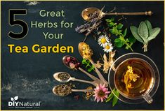 Save money and grow your own tea garden! You get to pick which plants to grow and create tea blends with the freshest herbs! Here are 5 good herbs for tea. Best Herbs To Grow, Growing Herbs, Growing Moss, Tea Before Bed, Tea For Colds, Organic Gardening Tips, Herb Gardening, Pallet Gardening, Indoor Gardening