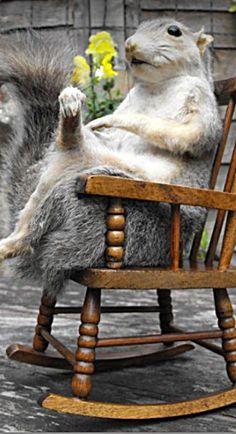 Squirrels rock!!