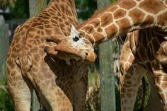 FB-Lowry Park Zoo, Tampa, FL cute