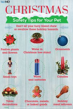 Christmas Tree Safety and Other Holiday Safety Tips: . Not only can your pet get tangled up in the lights, but they can also cause burns on both cats and dog if . Can Your Pet, Cooking White Rice, Classy Christmas, Animal Nutrition, Recipe Organization, Healthy Pets, Dog Eating, Food Hacks, Food Processor Recipes