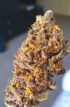 Purple mango kush #cannabis #weed http://budleader.com/blue-dream-stand-hype/