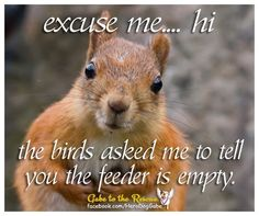 Just following directions Funny Animal Quotes, Funny Animal Videos, Funny Animals, Animal Humor, Good Morning Animals, Squirrel Pictures, Animal Antics, Creature Feature, Chipmunks