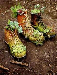 "For grade one science- upcycle...old boots turned succulent garden - cute!i did this but used baby shoes and cowboy boots, then made a sign that said 'old shoes and old friends are best"" for my front porch..<3"