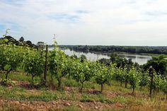Vineyards by the river, Eric Morgat, Anjou Vineyard, River, Outdoor, Outdoors, Rivers, Vineyard Vines, The Great Outdoors