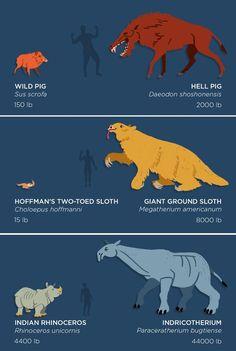 prehistoric animals mammals Skunk Bear The past is packed with monsters! Prehistoric Wildlife, Prehistoric World, Prehistoric Creatures, Fantasy Creatures, Mythical Creatures, Giant Animals, Dinosaur Art, Dinosaur Crafts, Survival Skills