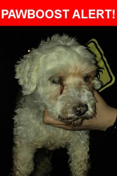 Is this your lost pet? Found in Wichita, KS 67217. Please spread the word so we can find the owner!  Small older white dog.  Blind in left eye. Collar w/2016 rabies vacine tag  Nearest Address: Near S Seneca St & W 47th St S