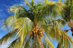 A dream of an island - Cayo Blanco