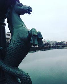 Seahorse | River Liffey - Dublin/Ireland    Por Brisa Dalila @entojo