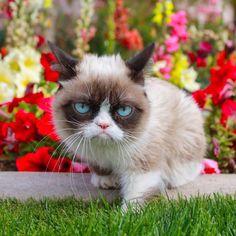 grumpy cat in the garden