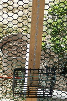 Suet Cages