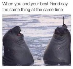 Friendship memes - 26 funny friend memes to send to your bestie Funny Shit, Funny Sarcasm, Mom Funny, Funny Sayings, Funny Jokes, Funny Stuff, Animal Memes, Funny Animals, Your Best Friend