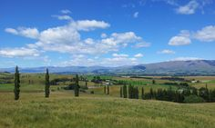 Totara Vallet in the Canterbury Plains NZ views