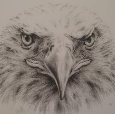 Popular items for eagle drawing on Etsy