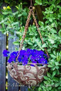 Pansies in burlap basket.