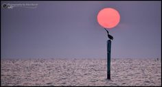 Alex North ...  Gulf  Coast