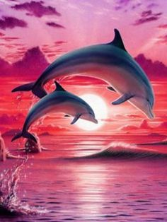 - Great photos of sea animals photos suggestions, great photos of sea tattoo ideas, Big # - Dolphin Painting, Dolphin Art, Orcas, Water Animals, Animals And Pets, Strange Animals, Animals Photos, Dolphin Images, Dolphins Tattoo