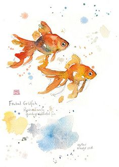 Fantail Goldfish - Bug Art greeting card