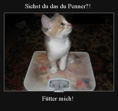 Cool Pictures, Funny Pictures, Facebook Humor, Funny Moments, Crazy Cats, Kittens Cutest, Funny Animals, Haha, Videos