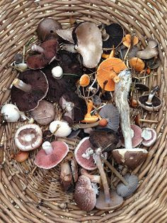 Go find your own food, and go Mushroom Hunting!