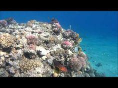 ▶ Schnorcheln in Ägypten: Korallen und Fische mit der ACTIONPRO X7 gefilmt - YouTube  Sieh Dir an, wie tolle Aufnahmen mit der ACTIONPRO X7 beim Tauchen entstehen können. Gefilmt in Ägypten.  http://actioncam-freestyle.de