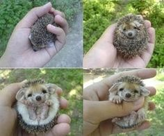 i will own you one day hedgie