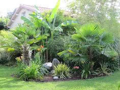 Excellent Photographs tropical gardening Strategies : Whether or not you would like to increase individual vegetables and fruits or just have got a lovely backyard vicinity Patio Tropical, Tropical Garden Design, Tropical Landscaping, Backyard Landscaping, Tropical Gardens, Landscaping Ideas, Bamboo In Pots, Bamboo Garden, Landscape Design Plans