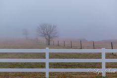 Foggy Trees Home Decor Old farm fences by LynScottPhotography