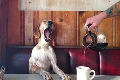 Dog Friendly Cafés in Canberra