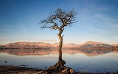 Lone Tree, Lonely, Mountains, Water, Travel, Outdoor, Gripe Water, Outdoors, Viajes